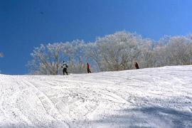 高山コース